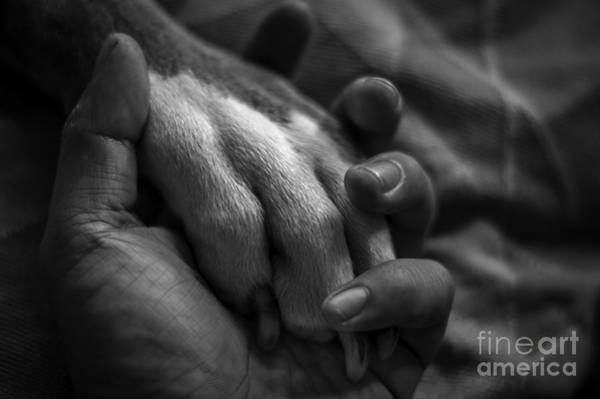 Service Dog Photograph - Who Rescued Who? by Daniel Garza