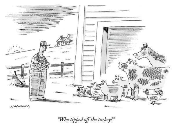 Farmer Drawing - Who Tipped Off The Turkey by Mick Stevens