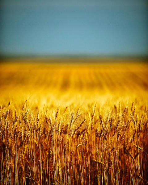 Photograph - Whole Wheat by Todd Klassy