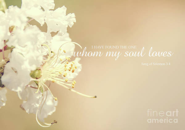 Photograph - Whom My Soul Loves by Andrea Anderegg
