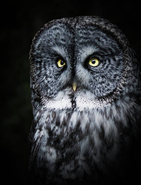 Whooo Are You Looking At? Art Print