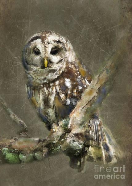 Barred Owl Photograph - Whoooo by Betty LaRue