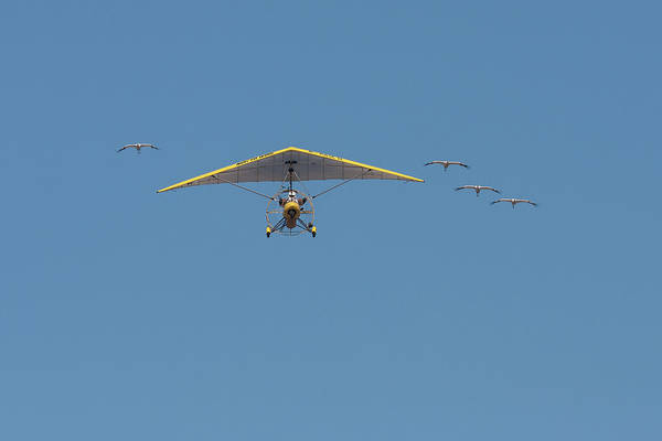 Photograph - Whooping Cranes And Operation Migration Ultralight by Paul Rebmann