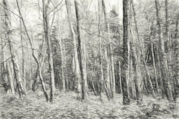 Flagler Photograph - Whose Woods These Are I Think I Know by Allan Van Gasbeck