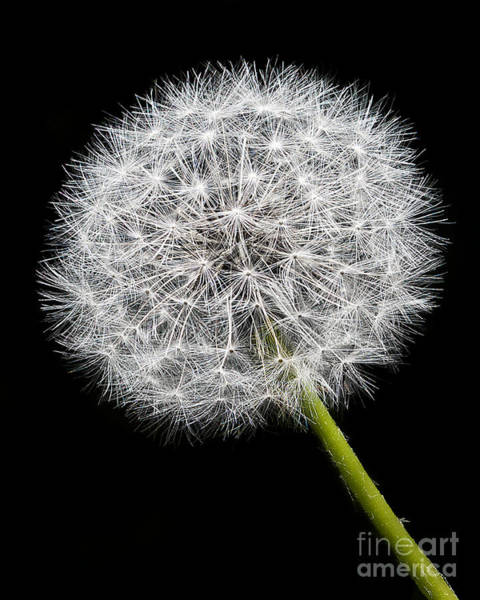 Dandelion Puff Photograph - Whoville by Mark Miller