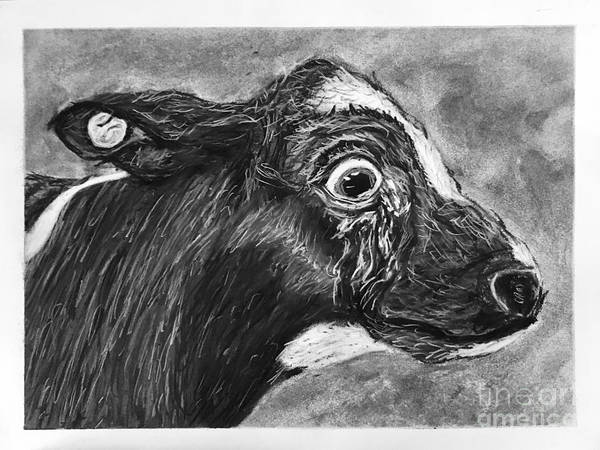 Vegan Drawing - Why by Robbie Potter