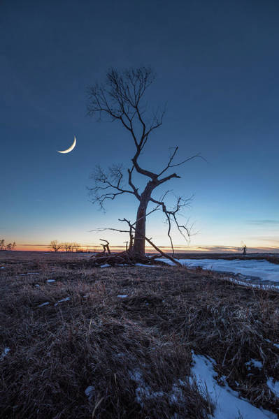 After Dark Photograph - Wicked Tree by Aaron J Groen