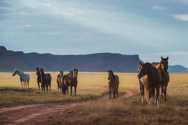 Wall Art - Photograph - Wide Open Spaces by Pamela Steege