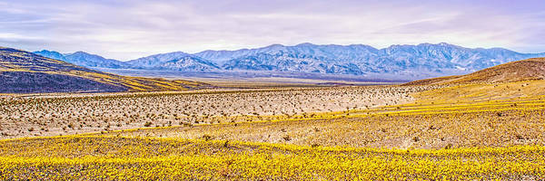 Photograph - Wide Open Wonder by Rick Wicker