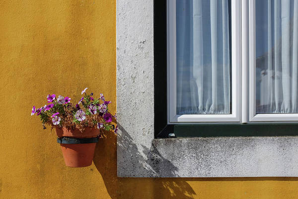 Wall Art - Photograph - Window With A Vase by Carlos Caetano