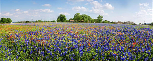 Photograph - Wild About Round Rock Wildflowers Panorama by Lynn Bauer