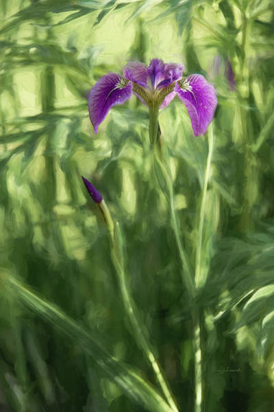 Photograph - Wild Alaskan Iris II by Penny Lisowski