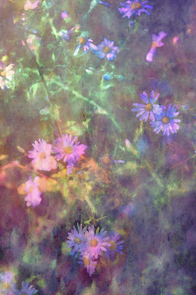 Photograph - Wild Aster 4278 Idp_2 by Steven Ward