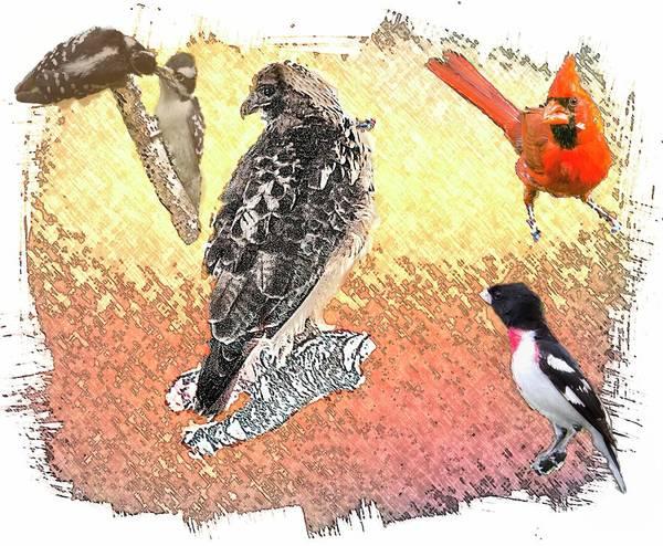 Digital Art - Wild Bird Collage by Rusty R Smith
