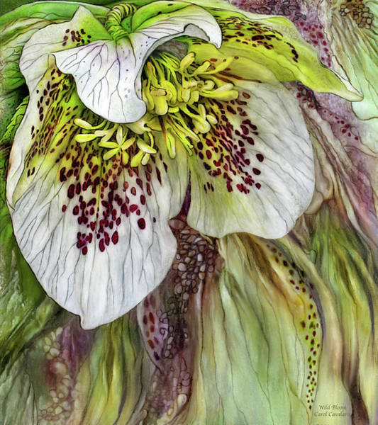 Mixed Media - Wild Bloom by Carol Cavalaris