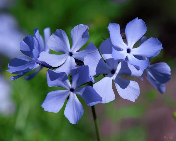 Photograph - Wild Blue Phlox Dspf0386 by Gerry Gantt