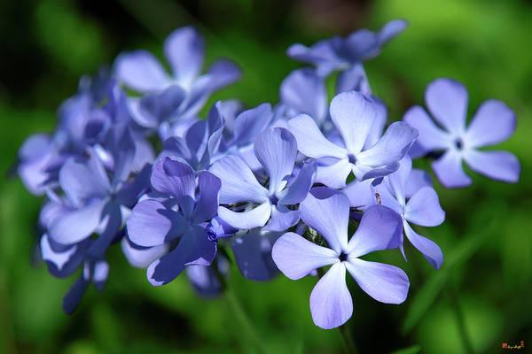 Photograph - Wild Blue Phlox Dspf0391 by Gerry Gantt