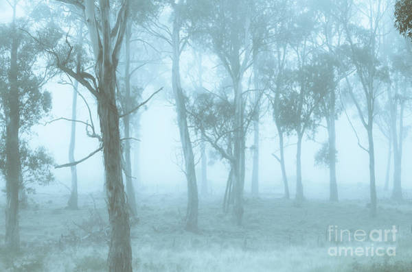 Gloomy Wall Art - Photograph - Wild Blue Woodland by Jorgo Photography - Wall Art Gallery