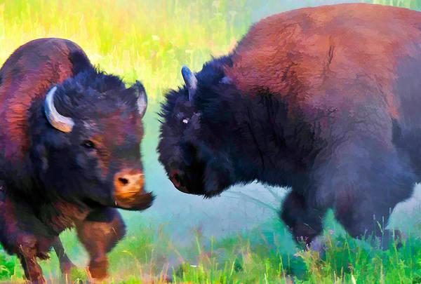 Photograph - Wild Buffalo Fight by Ginger Wakem