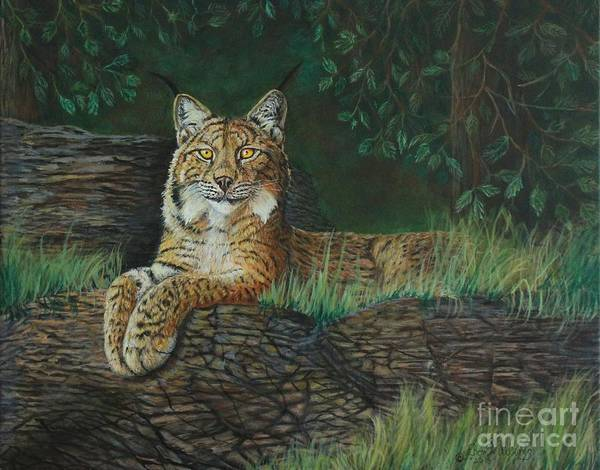 Painting - The Ever Watchful Lynx by Bob Williams