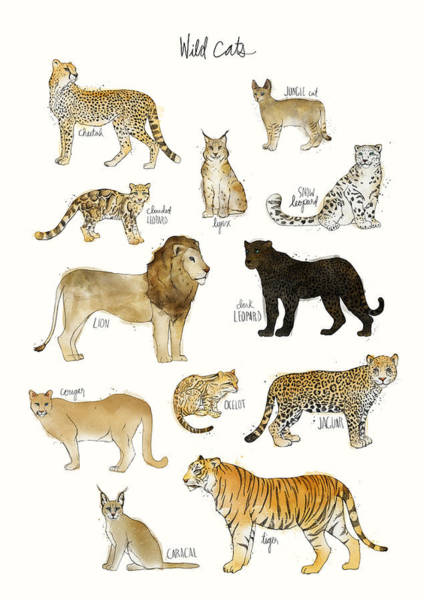 Fauna Wall Art - Painting - Wild Cats by Amy Hamilton