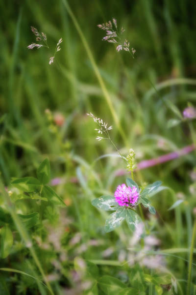 Photograph - Wild Clover by Bill Wakeley