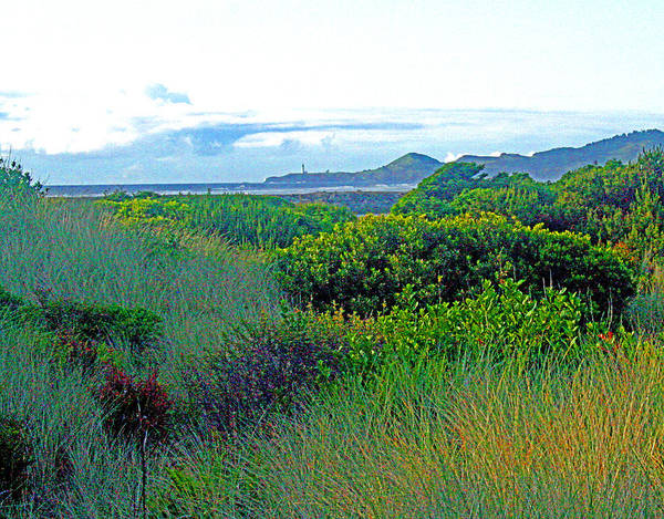 Photograph - Wild Coastal Flora by Joseph Coulombe