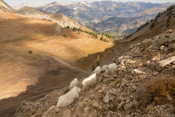 Photograph - Wild Country by Kent Keller