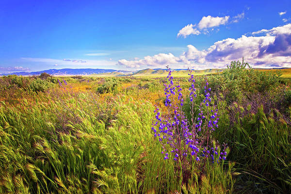 Photograph - Wild Delphinium On The Carrizo Plain Superbloom 2017 by Lynn Bauer