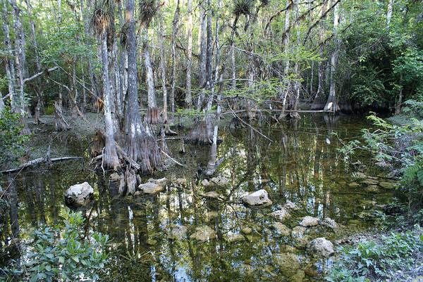 Alligator Alley Photograph - Wild Florida Everglades by Deb Bailey