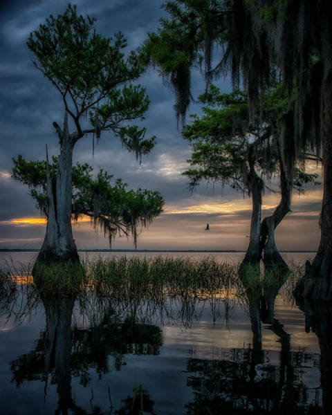 Photograph - Wild Florida by Ghostwinds Photography