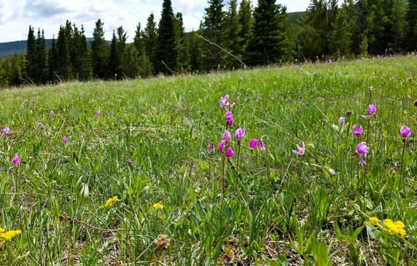 Digital Art - Wild Flower Landscape 2 by Susan Kinney