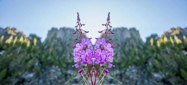 Pnw Wall Art - Photograph - Wild Flower Reflection by Pelo Blanco Photo