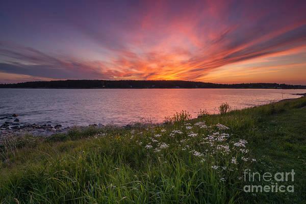 Port Clyde Photograph - Wild Flower Sunset by Michael Ver Sprill