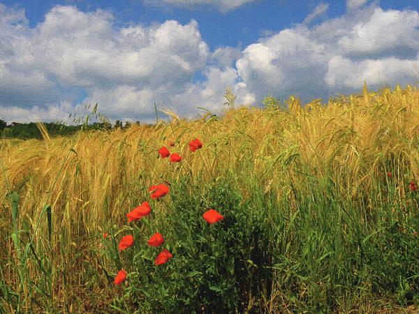 Wild Poppies Digital Art - Wild Flowers by Alex Lim