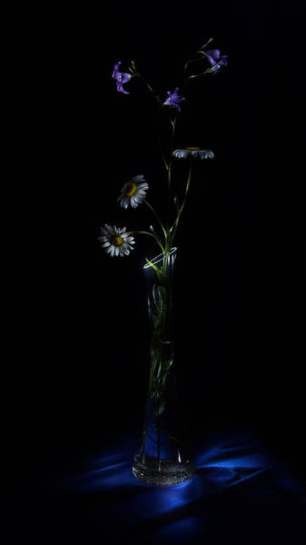Photograph - Wild Flowers by Alexey Kljatov