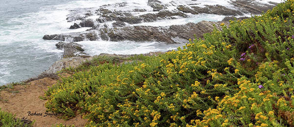 Wall Art - Photograph - Wild Flowers At The Beach Montana De Oro Detail by Barbara Snyder