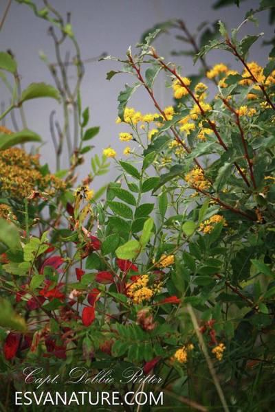 Photograph - Wild Flowers B by Captain Debbie Ritter