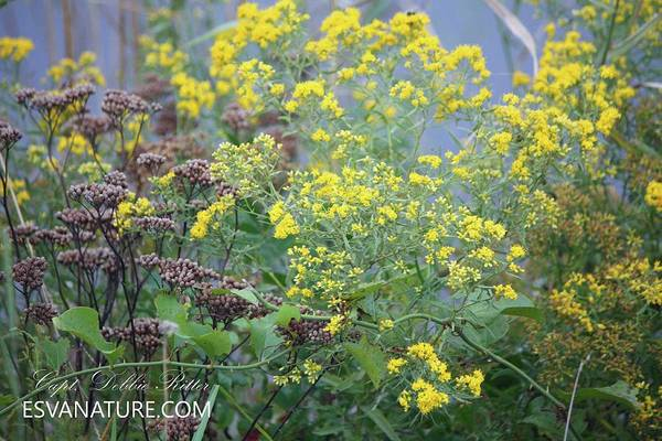 Photograph - Wild Flowers C by Captain Debbie Ritter