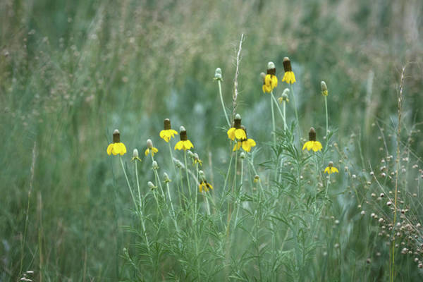 Wall Art - Photograph - Wild Flowers by Catherine Lau