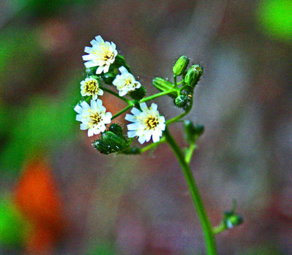 Photograph - Wild Flowers - Florence Oregon by Joseph Coulombe