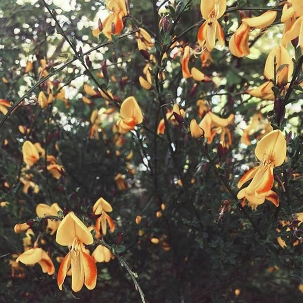 #wild #flowers #nature #natural Art Print