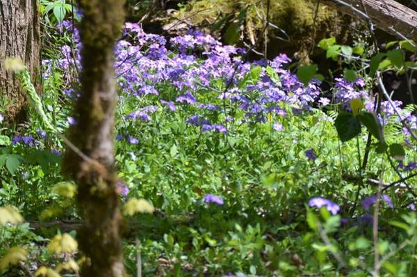 Photograph - Wild Flowers On A Hike by CK Brown