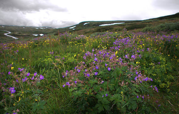 Photograph - Wild Flowers On The Way To Oslo by David Resnikoff