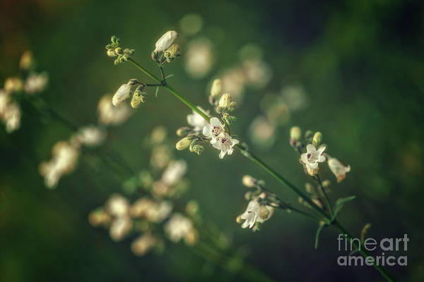 Photograph - Wild Flowers by Tim Wemple