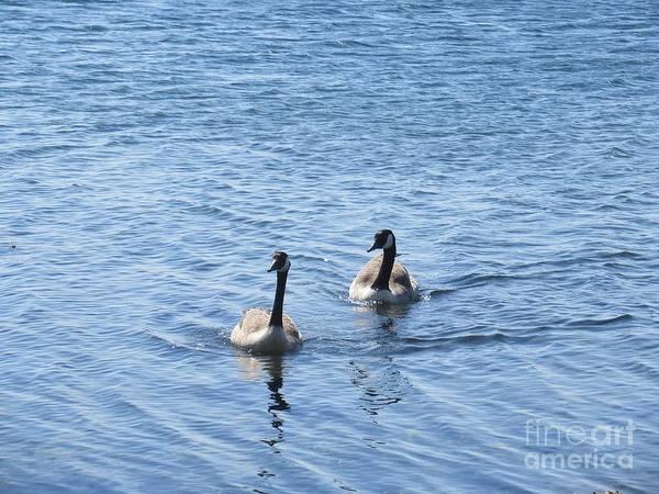 Photograph - Wild Geese In Stendorren by Chani Demuijlder
