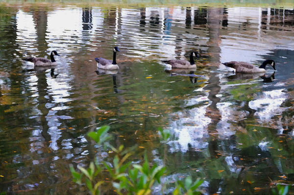 Water Foul Painting - Wild Geese On A Lake 4 by Jeelan Clark