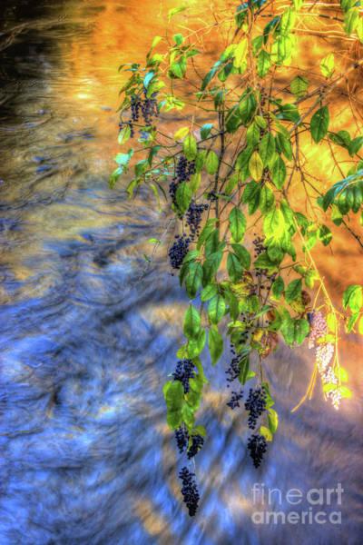 Wall Art - Photograph - Wild Grapes by Michael Tidwell