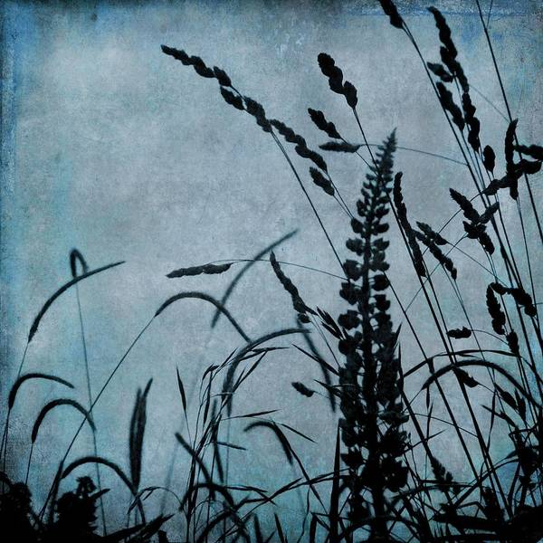 Photograph - Wild Grasses In Blue by Patricia Strand