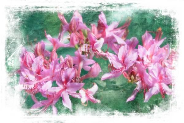 Digital Art - Wild Honeysuckles by Rusty R Smith